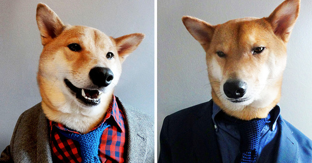 25 Times When Dogs Were Better At Being Something Else Than Just Dogs